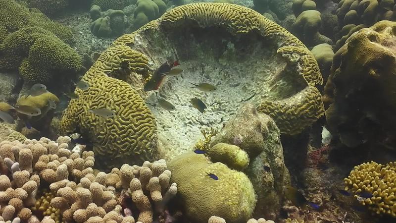 Bonaire-2018-Critters-StoplightParrotfish-DSCI1514