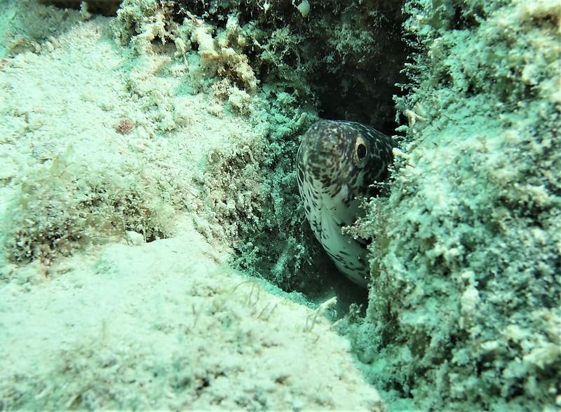 Bonaire-2018-Critters-Moray-DSCI1281 (2)