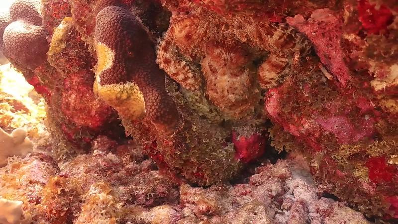 Bonaire-2018-Critters-Octo-DSCI1539