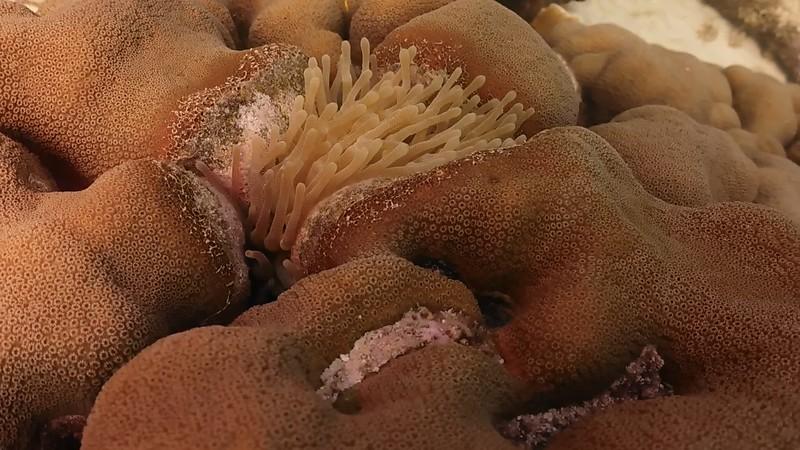 Bonaire-2018-Critters-Anenome-DSCI1525