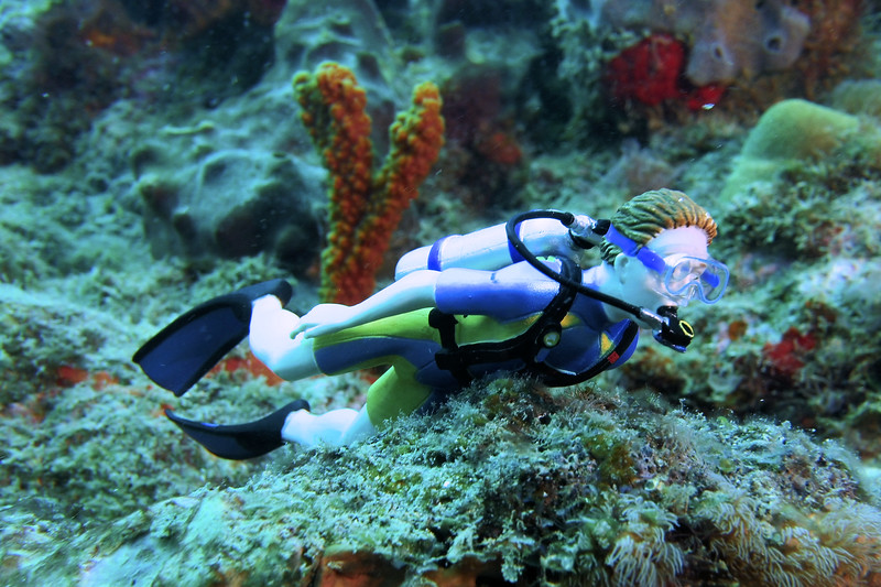 Meet DIVE BUDDY. He travels on all of our Diving Adventures. #DBFL