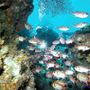 Simon Walsh greets a hello through a wall of Blackbar Soldierfish.