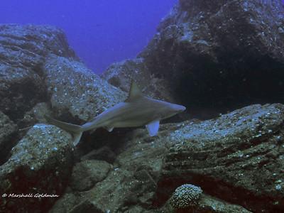 Kauai-2015-Sandbar Shark-3-P1010471