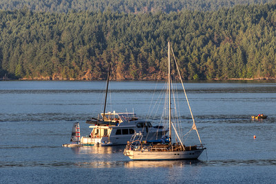 Anchored Boats - Cowichan Bay, Vancouver Island, British Columbia, Canada