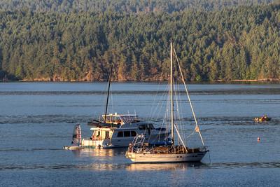 Anchored Boats - Cowichan Bay, Vancouver Island, British Columbia, Canada