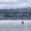 Sailboat - Victoria, Vancouver Island, British Columbia, Canada