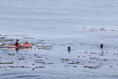 Kayaks and Ocean and Divers - Victoria, Vancouver Island, BC, Canada