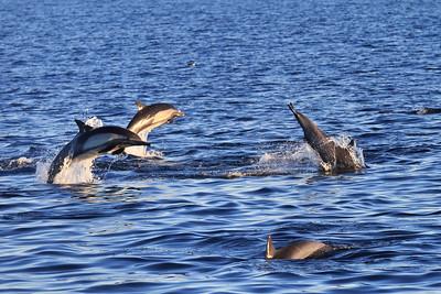 Channel Islands National Marine Sanctuary