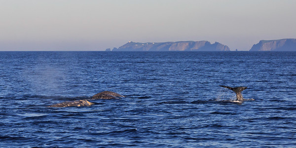 Channel Islands National Marine Sanctuary