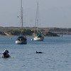 Several dolphins came through the harbor.