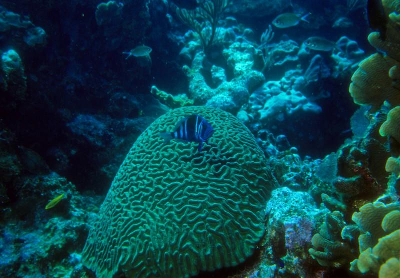 Nemo and Brain Coral