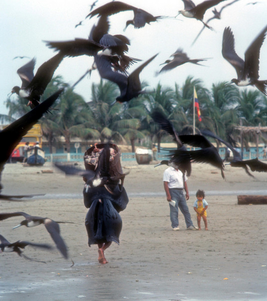 Frigate Birds steal the fish as workers carry the catch to a truck. They cover themselves in old iner tubes to keep the fish slime and birds off of them. Bahia de Carquez, Ecuador