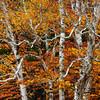 Cape Breton Fall Colors I