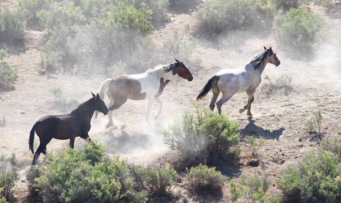 On the Move - The Wild Horses of Pilot Butte - Green River, Wyoming - Mark Rasmussen - May/June 2014