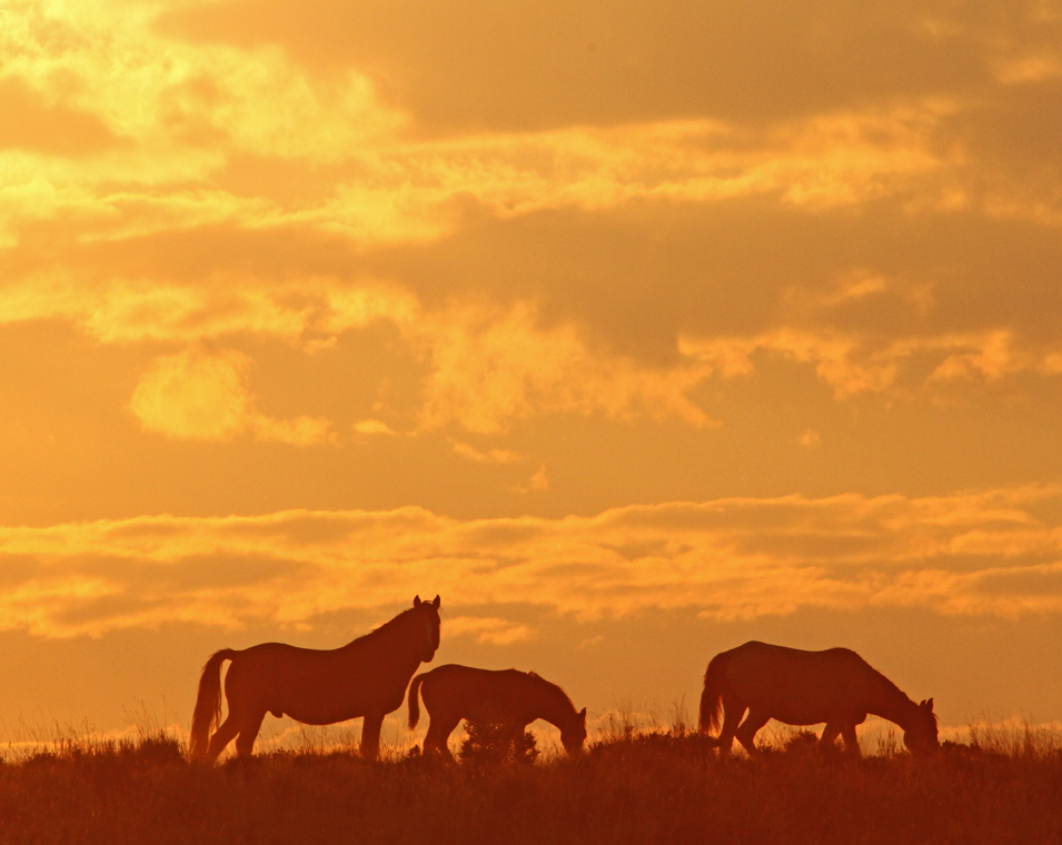 The Golden Hour - The Wild Horses of Pilot Butte - Green River, Wyoming - Mark Rasmussen - May/June 2014