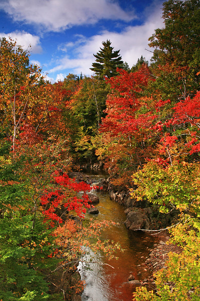 Sunlit creek and Fall color at Cape Breton Highlands - Nova Scotia - Mark Rasmussen
