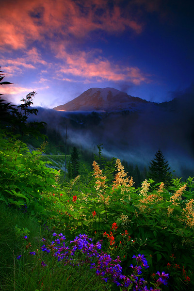 Sunset and high flowers and misty valley - Mt Rainier National Park, Washington - Mark Rasmussen