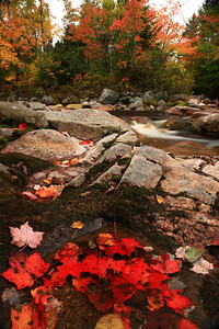 Creekside maple leaves and Fall color - Nova Scotia - Mark Rasmussen