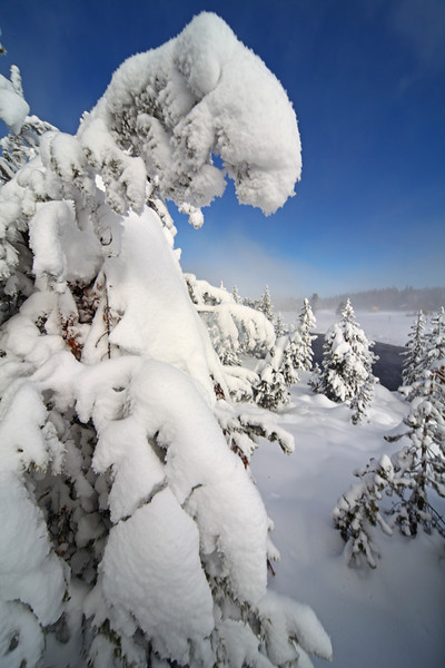 Snowy Treescape at Midway Geyser Basin - Yellowstone National Park, Wyoming - Mark Rasmussen