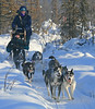 Dog sled express - Alaska - Mark Rasmussen