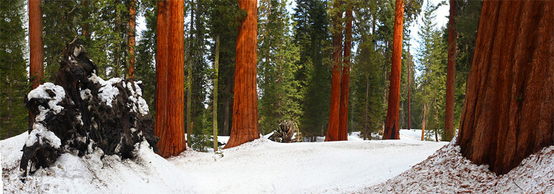 Mighty Sequoias - Panamoric - Sequoia National Park, California - Mark Rasmussen - February 2010