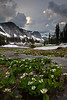 Marsh Marigolds and Storms - Rocky Mountain National Park, Colorado - Mark Rasmussen - July 2011
