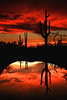 Saguaro sunset - Organ Pipe Cactus National Monument, New Mexico - Mark Rasmussen - 2009