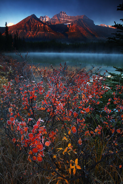 Sunrise on red frosted leaves at Herbert Lake - Canadian Rockies - Mark Rasmussen - September 2010