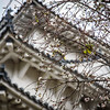 Cherry Blossoms at Himeji