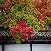 Fall Splendor in Kyoto