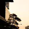 A Nara Evening