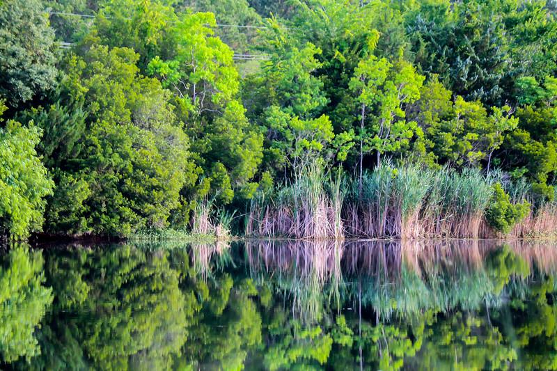 The Placid Morning Marsh