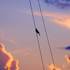 Bird in Rigging
