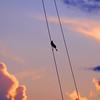 Bird in Rigging