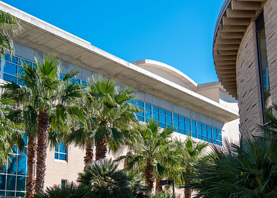 Palm trees line the walk way between Bay Hall and the Student Services Center.