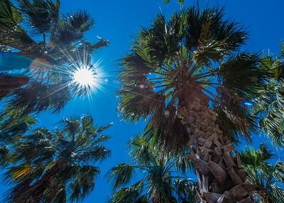 The sun shines through palm tree leaves.