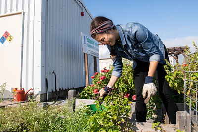 Student Jordan Rodriguez volunteers at the Islander Green Garden.