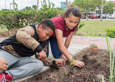 Caleb Clemmons (Left) and Andrea Villarreal (Right) help eachother plant their Basil plant.