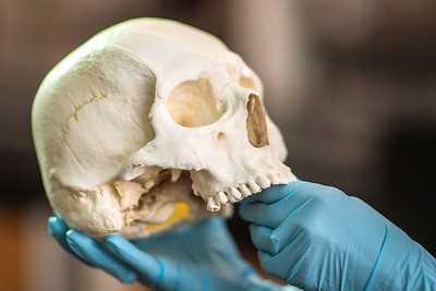 2019_0214-ForensicAnthropology-ED-4598