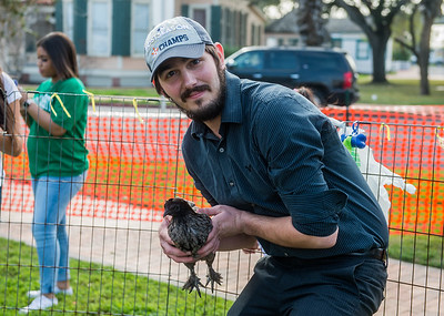 Lenson Smith showing off his chicken at the Islander Block Party.