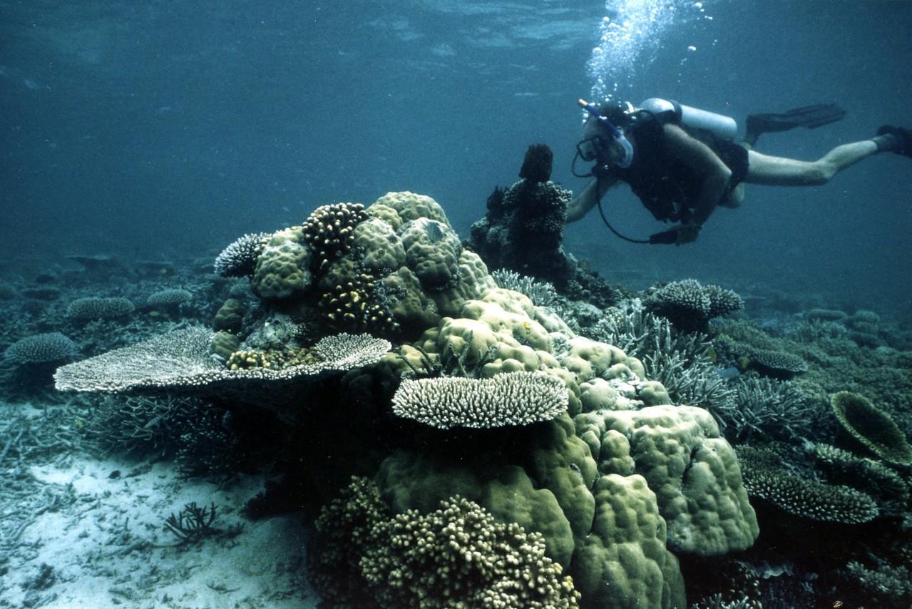 Palau 1991