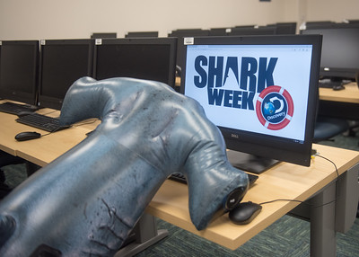 Hunter checks out Discovery Channel's Shark Week in the computer lab in Island Hall.  Learn about TAMU-CC's participation in Shark Week:  http://bit.ly/2uIUKYq