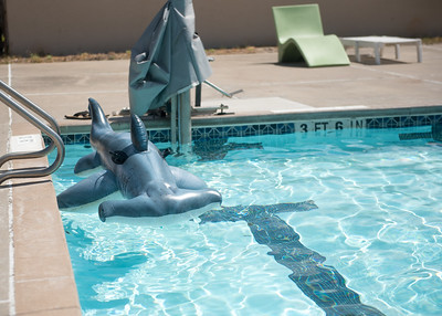 Hunter cools off in the pool on campus.  Learn about TAMU-CC's participation in Shark Week:  http://bit.ly/2uIUKYq