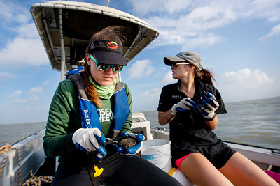 Danielle Zimmermann (left) and Desiree Corbiere measure oyster shell's width, height, and length at their sampling site in Aransas Bay.
