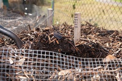 Compost process at the Islander Green Garden.