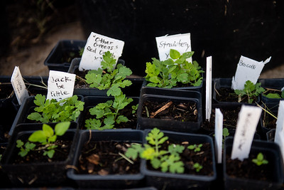 A few of the plants that will be grown at the Islander Green Garden.