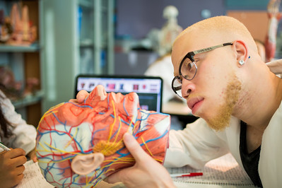 Marcus Nkuko studies the muscles in the upper body in an Anatomy and Physiology lab.
