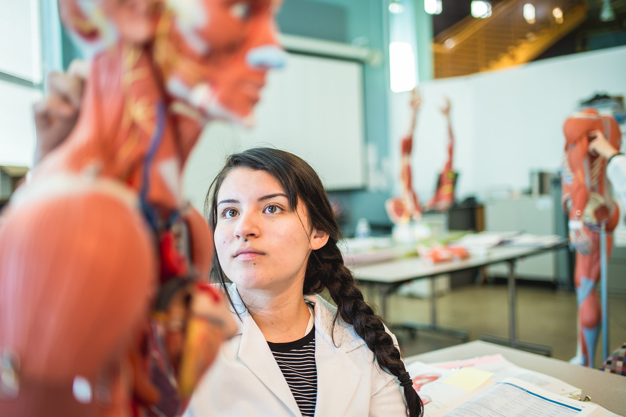 Clarissa Gonzalez studies the muscles in the upper body for her Anatomy and Physiology lab.