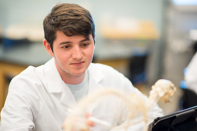 Kevin Ydoyaga studies a skeletal system during his functional anatomy lab.