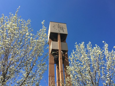 Bell Tower In Bloom